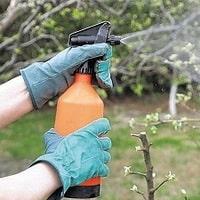 Опрыскивание деревьев от вредителей в фазе почки и бутона