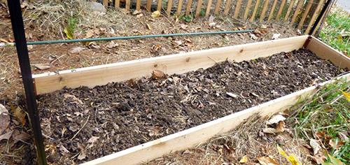 Выращивание малины по методу Соболева: подготовка