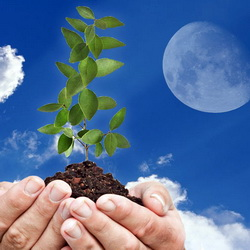 Лунный посевной календарь садовода-огородника-цветовода