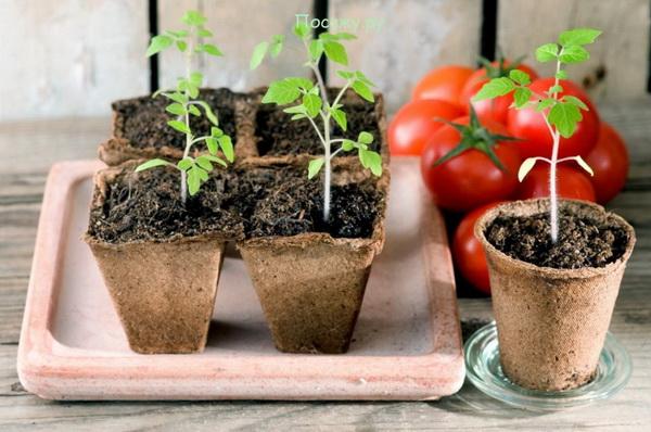 Правила посадки семян на рассаду весной
