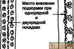 Схема места внесения удобрений