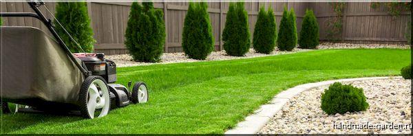 Как часто стричь газон
