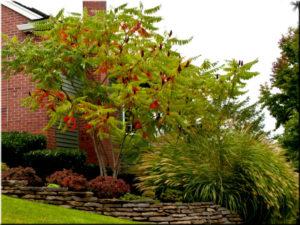 кустарники и деревья перед домом