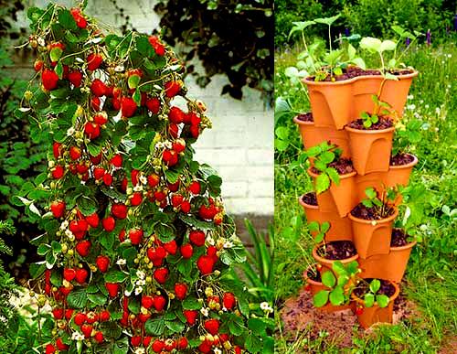Выращивание клубники на вертикальных грядках