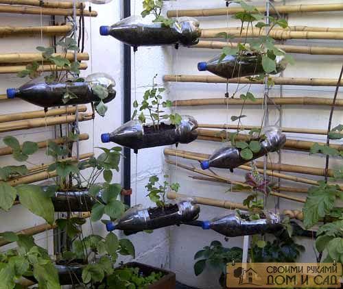 вертикальный сад из …