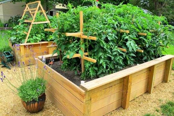Для огурцов и помидор необходимо позаботиться о подвязке