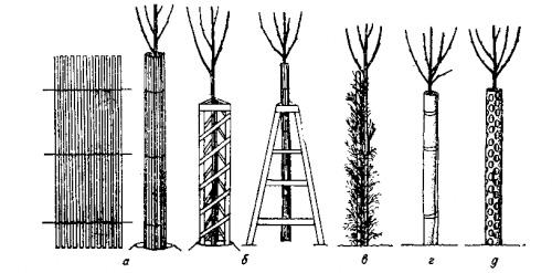Как защитить деревья на зиму