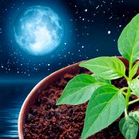 Лунный посевной календарь садовода-огородника-цветовода на ноябрь 2019 года